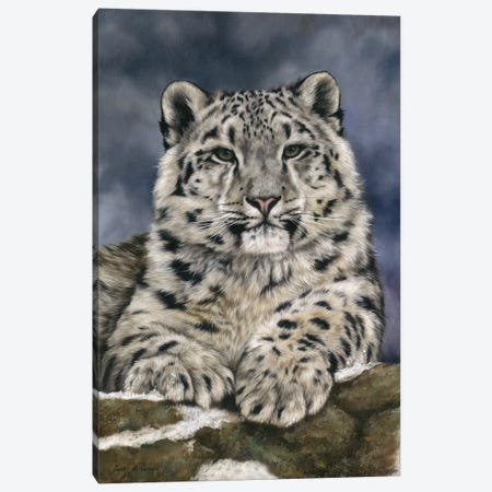 Snow Leopard III Canvas Print #SAS90} by Sarah Stribbling Canvas Artwork