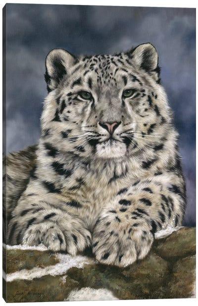 Snow Leopard III Canvas Art Print
