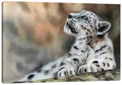 Snow Leopard Cub II Canvas Art Print