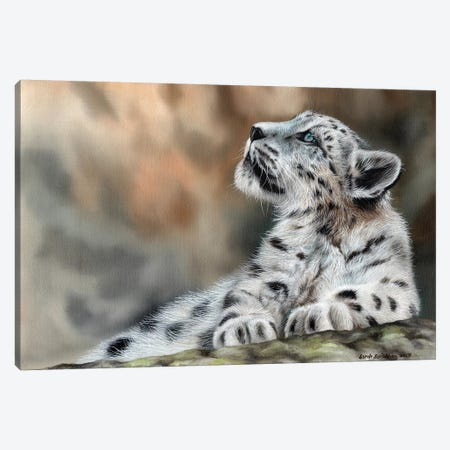 Snow Leopard Cub II Canvas Print #SAS91} by Sarah Stribbling Canvas Artwork