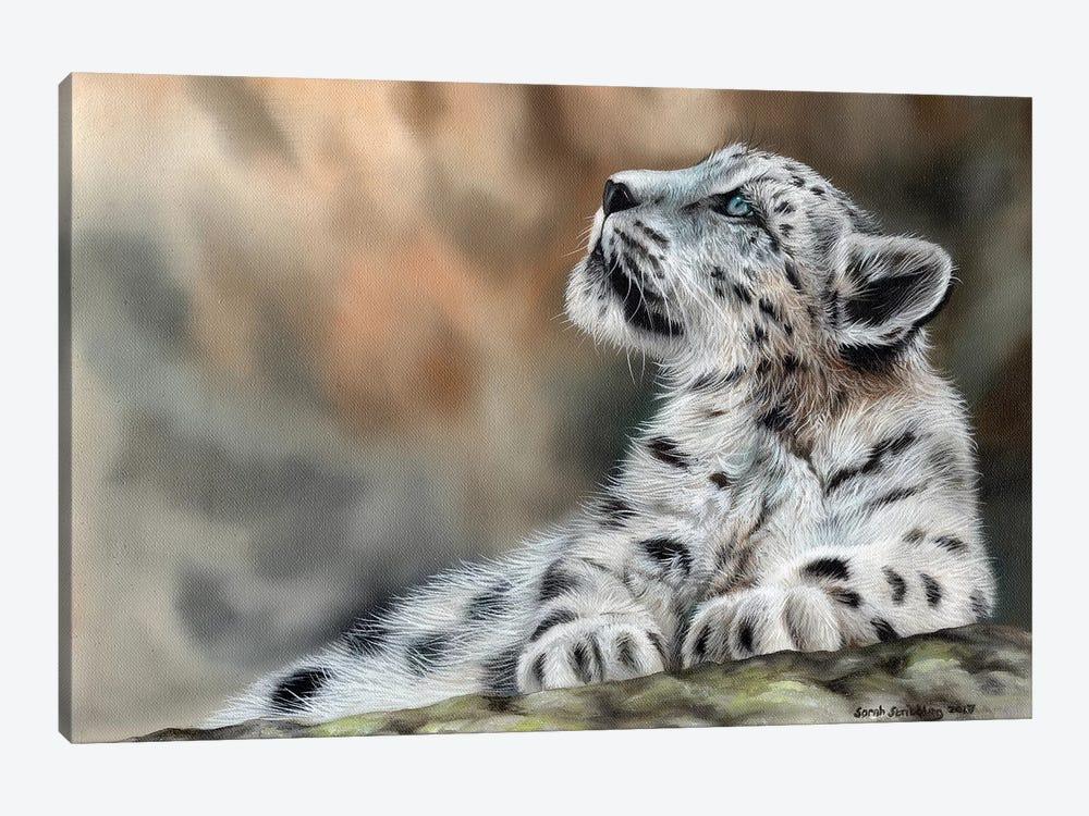Snow Leopard Cub II by Sarah Stribbling 1-piece Art Print