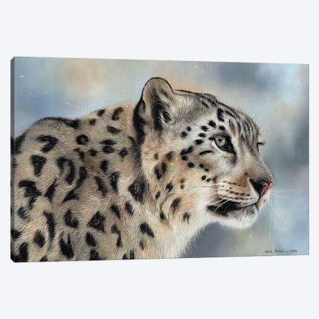 Snow Leopard IV Canvas Print #SAS92} by Sarah Stribbling Canvas Wall Art