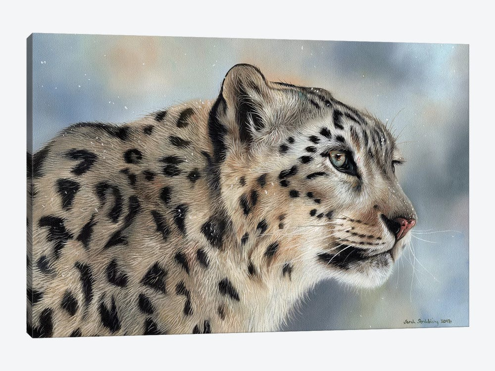 Snow Leopard IV by Sarah Stribbling 1-piece Canvas Wall Art