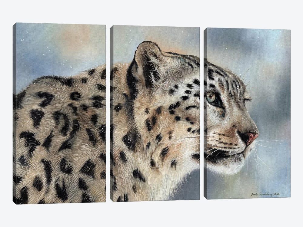 Snow Leopard IV by Sarah Stribbling 3-piece Canvas Art