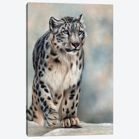 Snow Leopard Canvas Print #SAS93} by Sarah Stribbling Canvas Art