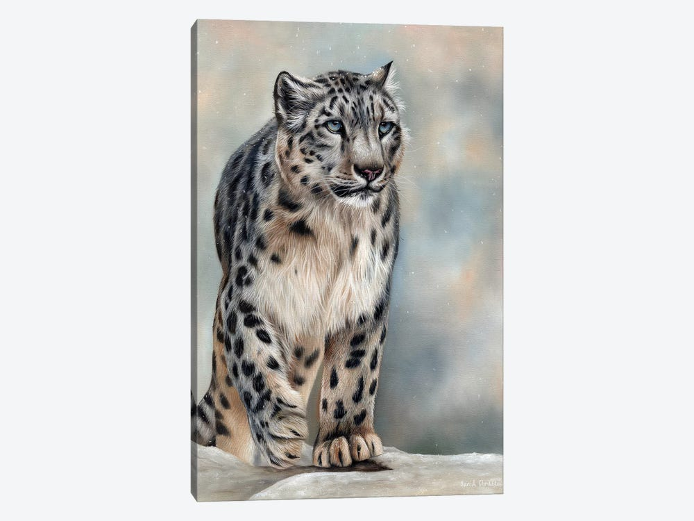Snow Leopard by Sarah Stribbling 1-piece Canvas Print