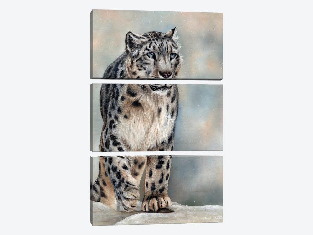 Snow Leopard by Sarah Stribbling 3-piece Art Print