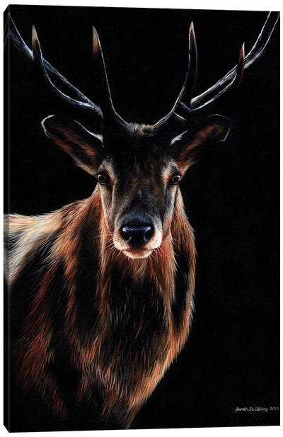 Stag Canvas Art Print