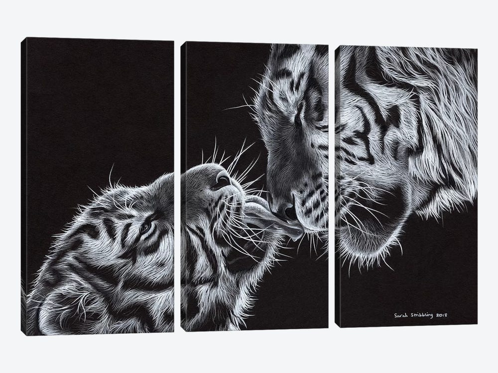 Tiger And Cub by Sarah Stribbling 3-piece Art Print