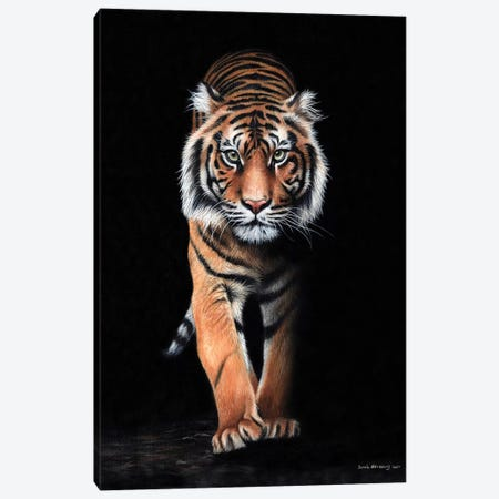 Tiger Black Canvas Print #SAS98} by Sarah Stribbling Canvas Wall Art