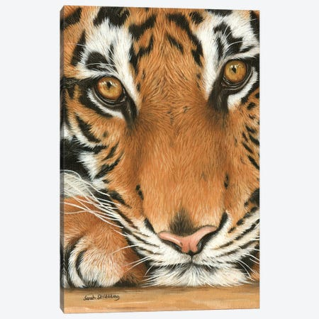 Tiger Close-Up I Canvas Print #SAS99} by Sarah Stribbling Canvas Wall Art