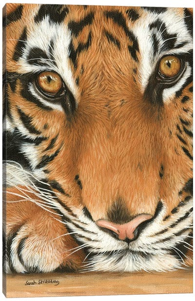 Tiger Close-Up I Canvas Art Print