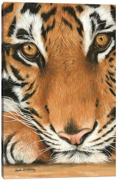 Tiger Close-Up I Canvas Art Print