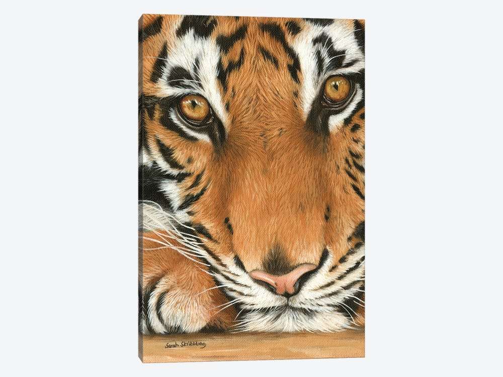 Tiger Close-Up I by Sarah Stribbling 1-piece Art Print