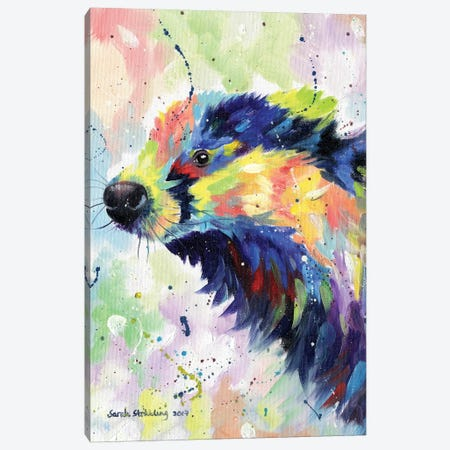 Badger Colour Canvas Print #SAS9} by Sarah Stribbling Canvas Art Print
