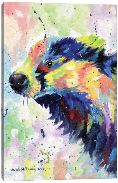 Badger Colour Canvas Art Print