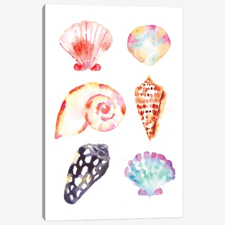 Seacoast Shells Canvas Print #SBE105} by Sara Berrenson Canvas Art