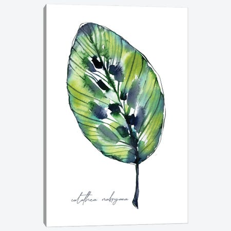 Tropical Calathea Canvas Print #SBE110} by Sara Berrenson Canvas Wall Art