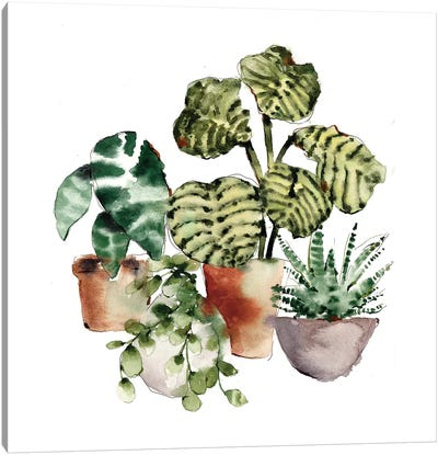 House Plants Canvas Art Print
