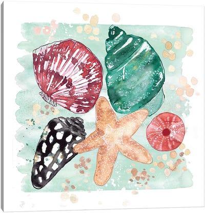 Beachcomber - Shell Medley Canvas Art Print