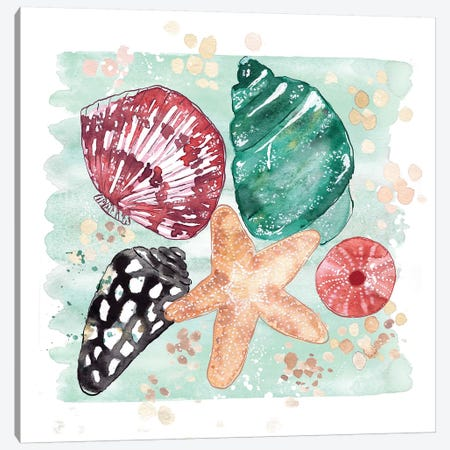 Beachcomber - Shell Medley Canvas Print #SBE3} by Sara Berrenson Canvas Art Print