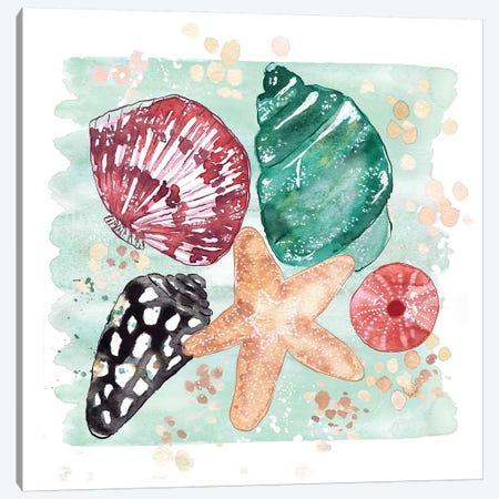 Beachcomber - Shell Medley 3-Piece Canvas #SBE3} by Sara Berrenson Canvas Art Print