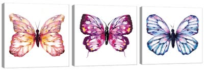 Butterfly Triptych Canvas Art Print