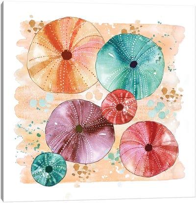 Beachcomber - Sea Urchins Canvas Art Print