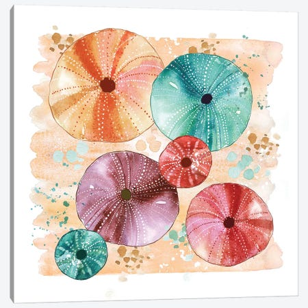 Beachcomber - Sea Urchins Canvas Print #SBE5} by Sara Berrenson Canvas Artwork
