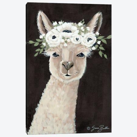 Llama     Canvas Print #SBK26} by Sara Baker Canvas Wall Art