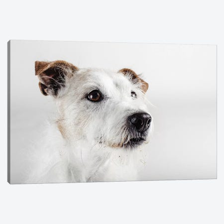 Spike Zuck Canvas Print #SBO6} by Susan Sabo Canvas Wall Art