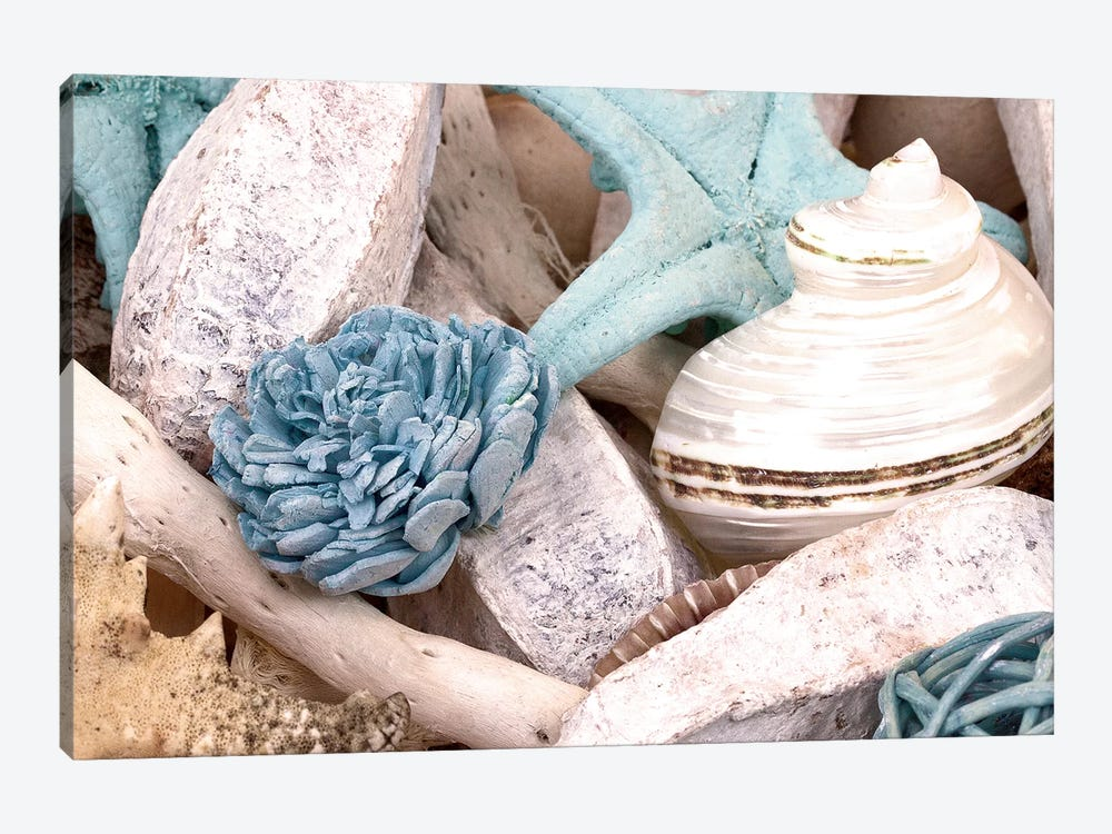 Bundle of Shells II by Susan Bryant 1-piece Canvas Art Print