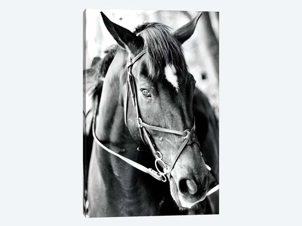 Derby I by Susan Bryant 1-piece Canvas Print
