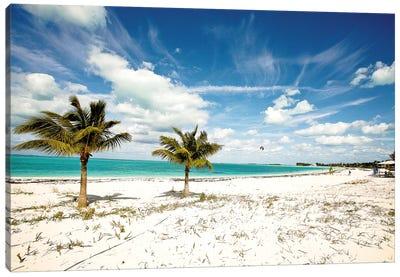Palms and Kites Canvas Art Print