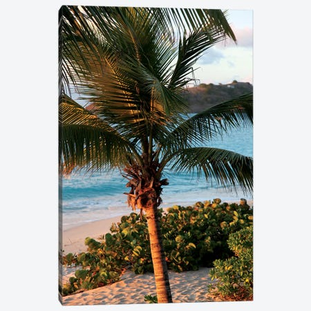 Sunset Palms I Canvas Print #SBT46} by Susan Bryant Canvas Art Print