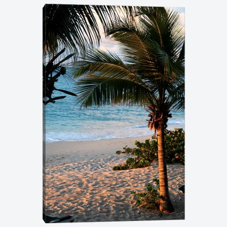 Sunset Palms II Canvas Print #SBT47} by Susan Bryant Art Print