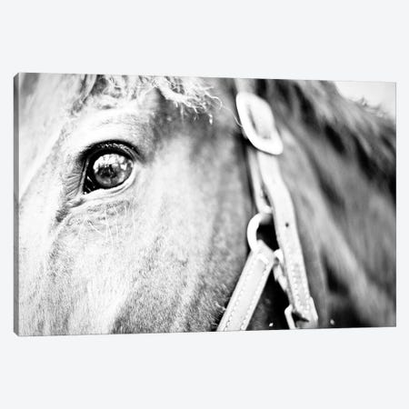 Horseback Riding Canvas Print #SBT60} by Susan Bryant Canvas Art