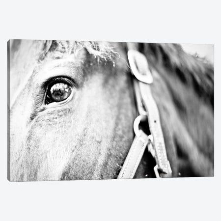 Horseback Riding Canvas Print #SBT60} by Susan Bryant Canvas Art