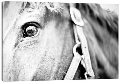 Horseback Riding Canvas Art Print