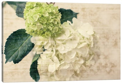 Hydrangeas I Canvas Art Print