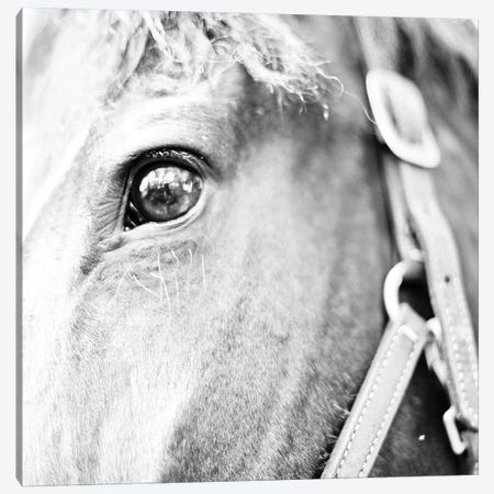 In The Stable I Canvas Print #SBT63} by Susan Bryant Canvas Wall Art