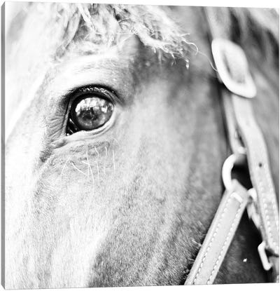 In The Stable I Canvas Art Print