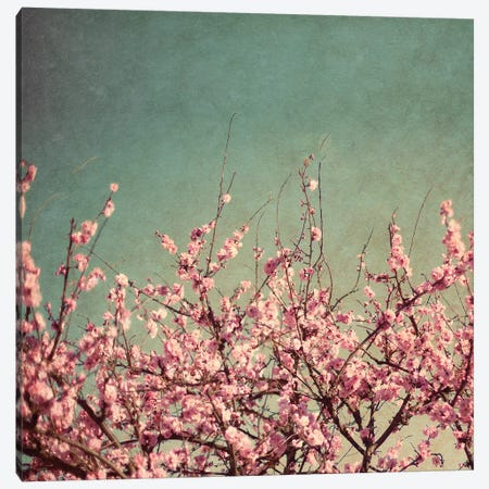 Springtime II Canvas Print #SBT76} by Susan Bryant Canvas Art