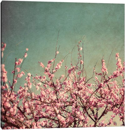 Springtime II Canvas Art Print