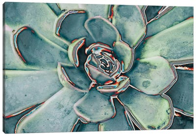 Teal Succulent Canvas Art Print