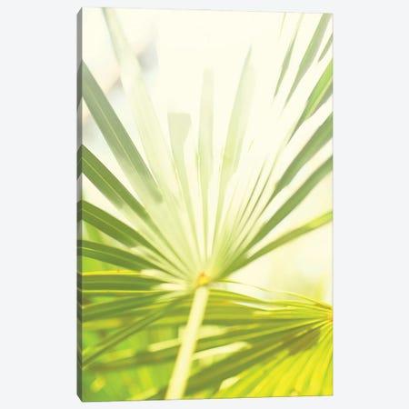 Among Palms I Canvas Print #SBT87} by Susan Bryant Art Print