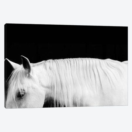 White On Black I Canvas Print #SCA13} by Samantha Carter Canvas Print