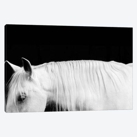 White On Black I Canvas Print #SCA13} by Samantha Carter Canvas Print