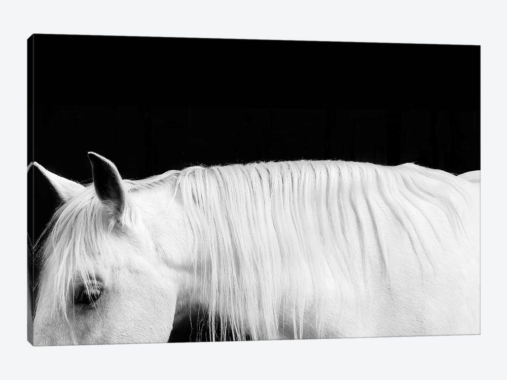 White On Black I by Samantha Carter 1-piece Canvas Art Print