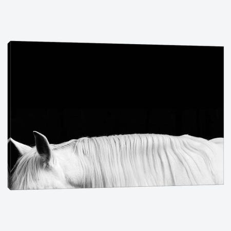 White On Black II Canvas Print #SCA14} by Samantha Carter Canvas Artwork